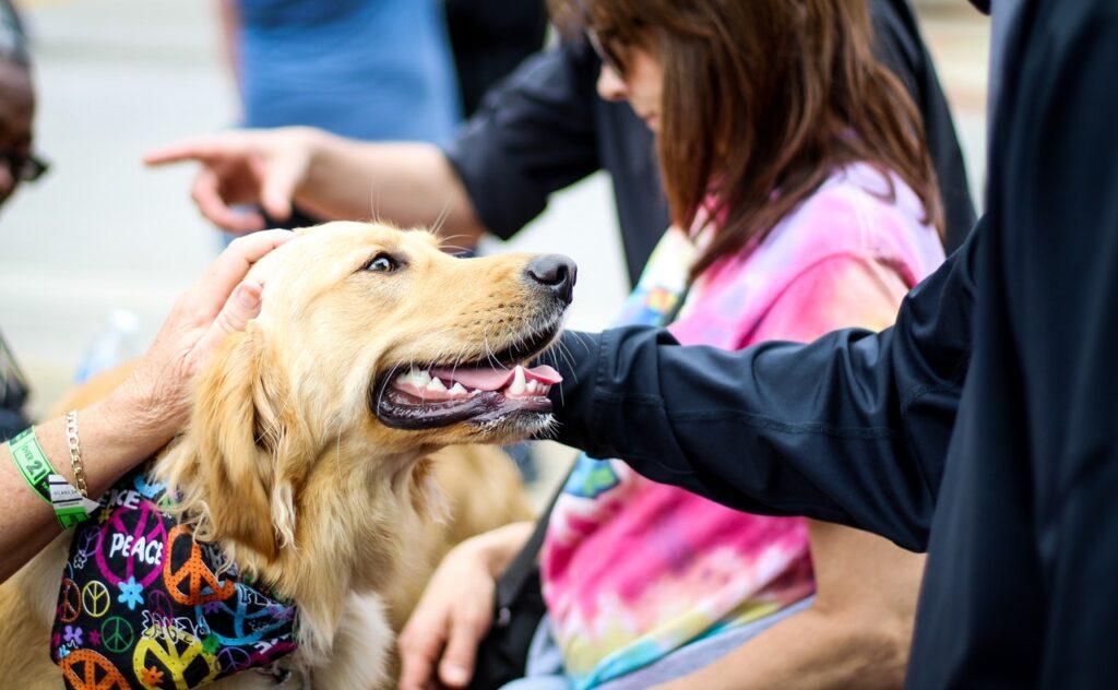 Guide til at planlægge en rejse med børn og hund
