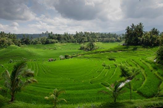 Alt hvad du skal vide om Bali