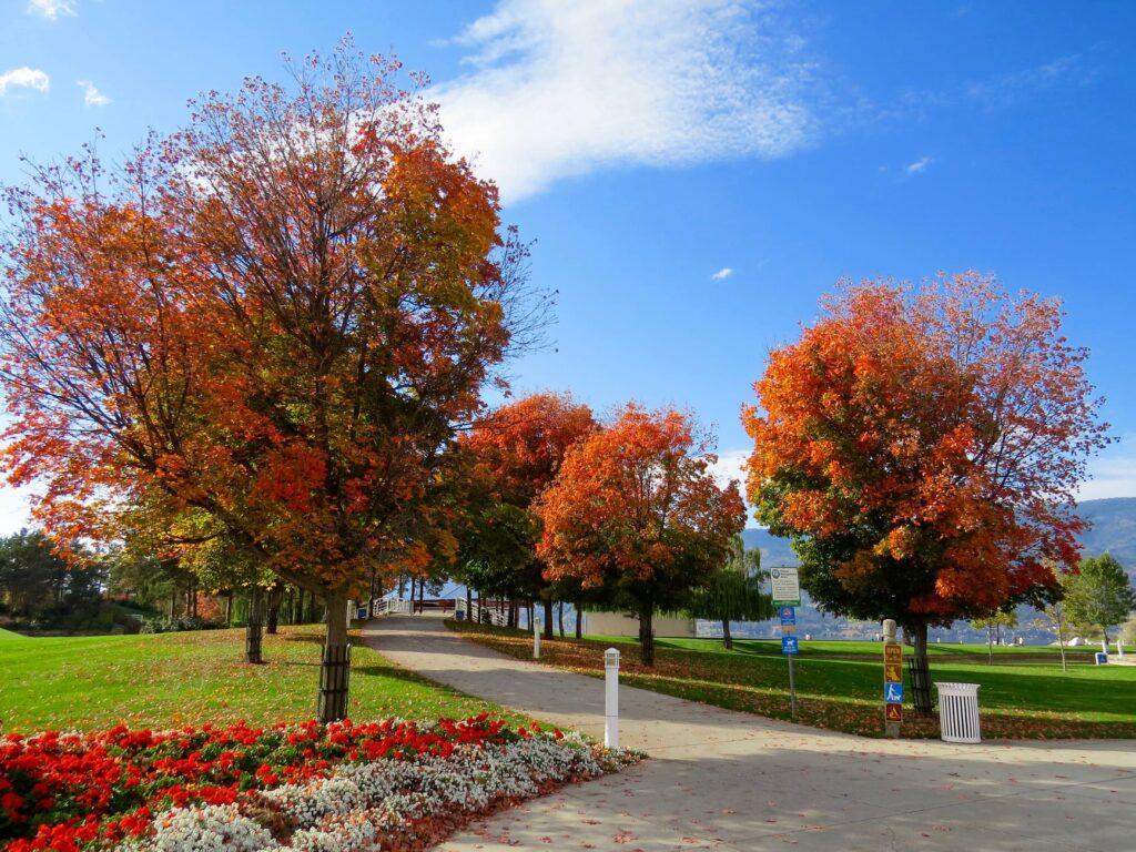 Få den flotteste have
