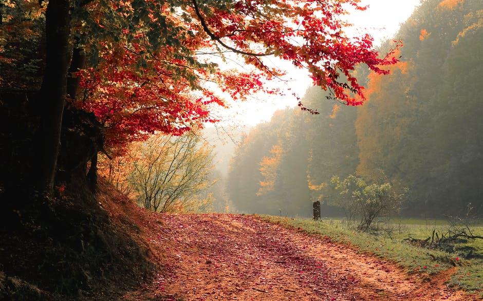 Sundhed: sådan forbereder du dig bedst mod efterårets komplikationer